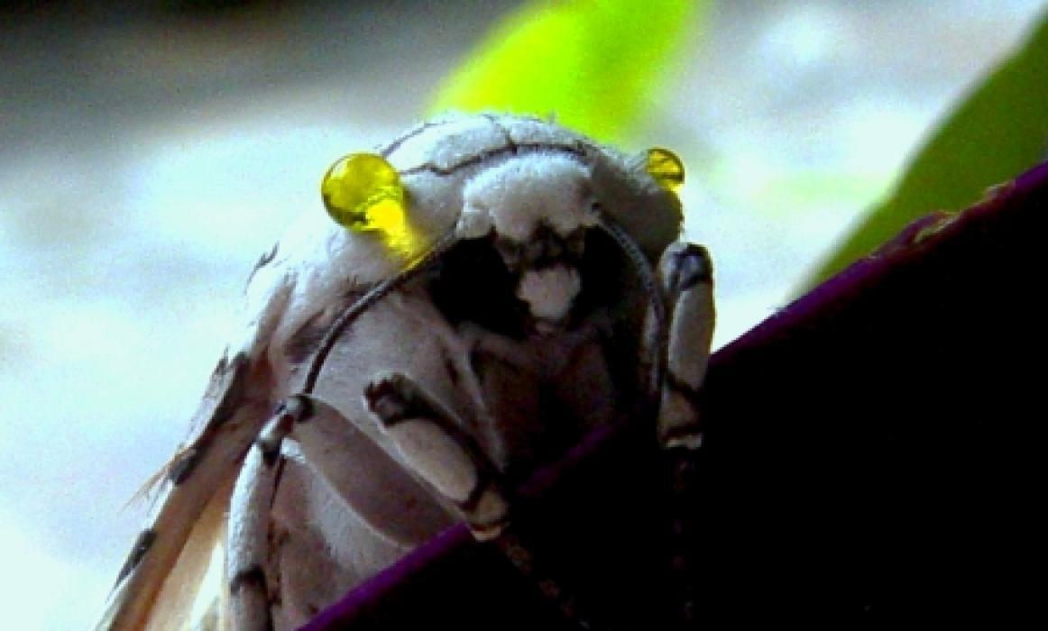orchid-room-moth-garden-sjo